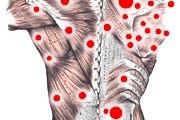 http://www.beholistic.pt/wp-content/uploads/2014/07/fibromyalgia-trigger-points-180x120.jpg
